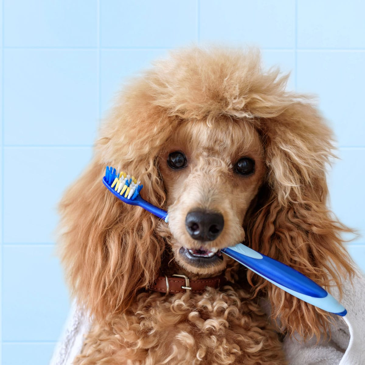 PET DENTAL HEALTH MONTH - February 2020   National Today