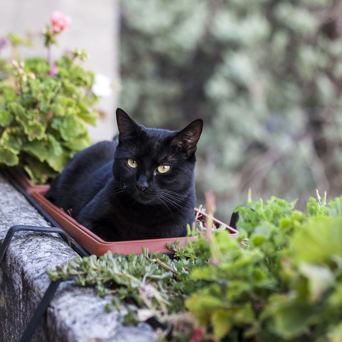 National Black Cat Appreciation Day August 17 2020 National Today