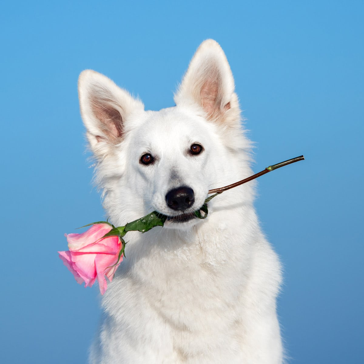 Doggy Date Night February 3 2020