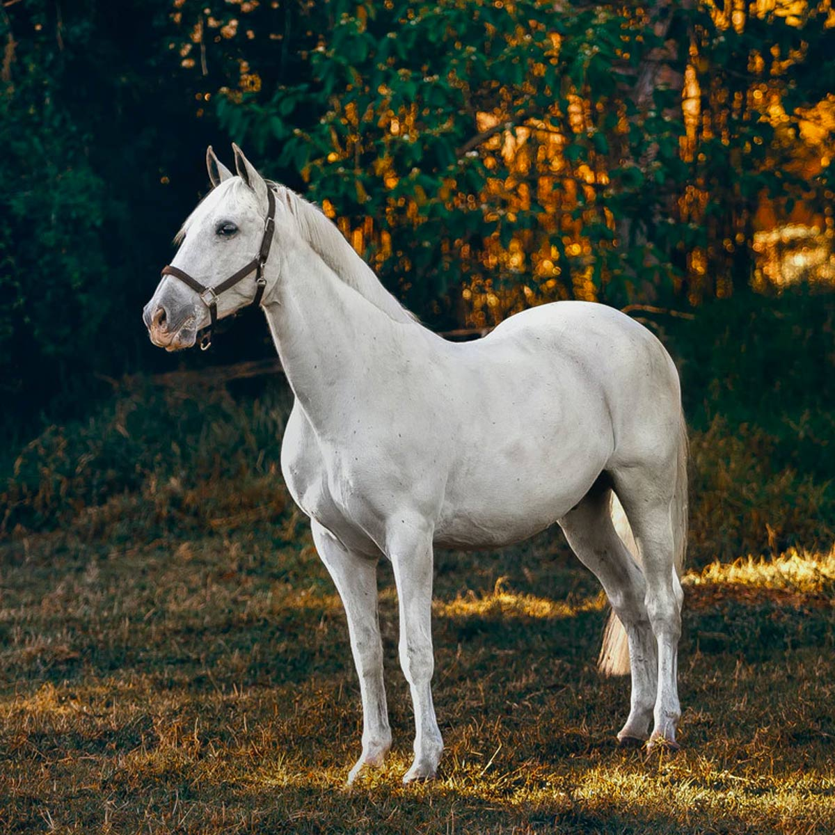 NATIONAL HORSE DAY - December 13, 2021 | National Today