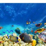 Fish-Amnesty-Day