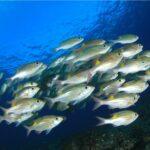 Fish-Tank-Floorshow-Night